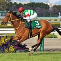 天才牝馬と呼ばれたハープスターが引退