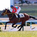 3月3週目の注目レースその2「阪神大賞典」