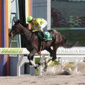 4月3週目の注目レースその3「アンタレスステークス」